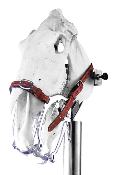 Speculum WorldWide Equine 2020 Series